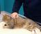 Żory: Dzielnicowy uratował kota